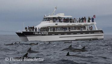 Carmel Ca Whale Watching Tours
